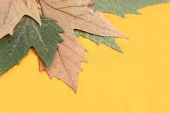 Folha seca Foto de Stock