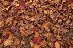 Folha seca Fotos de Stock