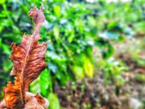 Folha seca Foto de Stock Royalty Free