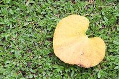 Folha seca amarela na grama verde imagem de stock