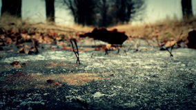A folha seca cai para baixo no gelo filme