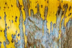Folha seca da banana Fotografia de Stock