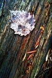 Folha seca do outono na madeira fotografia de stock royalty free