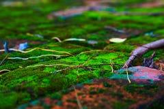 Folha seca em raizes de Mos And Foto de Stock Royalty Free