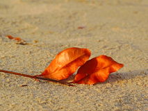 Folha seca na areia fotografia de stock