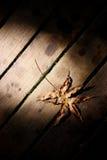 Folha seca na madeira Imagem de Stock Royalty Free