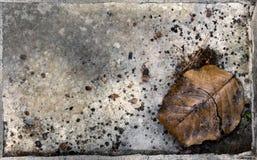 Folha seca na superfície da placa Fotos de Stock Royalty Free
