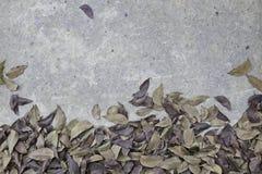 Folha seca no fundo áspero do assoalho do cimento foto de stock