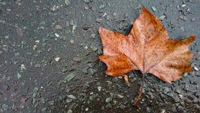 Folha seca sob o fundo da chuva imagem de stock