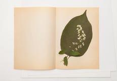 A folha secada da cereja do lilás e de pássaro floresce na folha do papel velho Imagens de Stock
