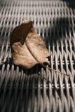 Folha secada na cadeira de vime Fotografia de Stock Royalty Free