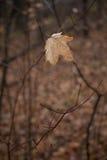 Folha solitária Fotografia de Stock