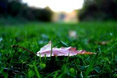 Folha solitária Foto de Stock