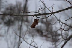 Folha solitária em um treebranch Fotografia de Stock