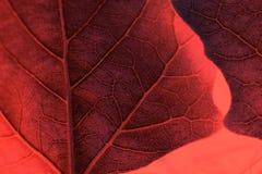 Folha Textured com as veias no fundo coral fotos de stock royalty free