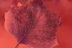 Folha Textured com gotas na cor do coral de vida foto de stock