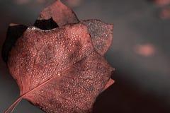 Folha Textured com gotas na cor do coral de vida imagem de stock