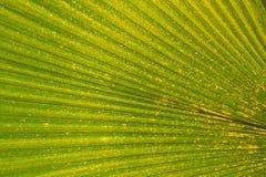 Folha tropical Fotos de Stock