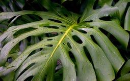 Folha tropical imagens de stock royalty free