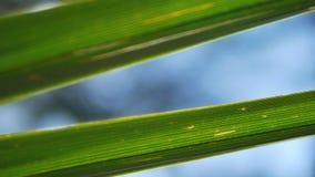 Folha tropical, close-up super no fundo borrado da folha e do c?u Brilho de Sun, bokeh video estoque