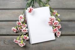 Folha vazia do caderno entre o cravo cor-de-rosa Imagem de Stock