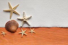 Folha vazia e shell do papel feito a mão Imagens de Stock