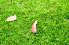 Folha velha na grama verde. Foto de Stock