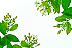 Folha verde Imagens de Stock Royalty Free