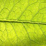 Folha verde Fotografia de Stock
