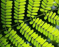 folha verde Imagens de Stock