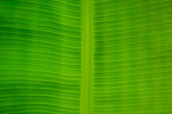 A folha verde Foto de Stock