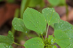 folha verde Foto de Stock