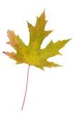 folha Verde-amarela como o símbolo do outono Fotos de Stock Royalty Free