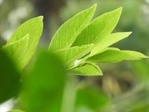 Folha verde bonita fotografia de stock