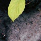 Folha verde bonita foto de stock royalty free