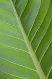 Folha verde bonita Imagens de Stock Royalty Free