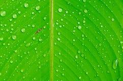 Folha verde bonita com gotas da água Imagem de Stock Royalty Free