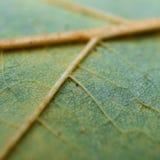 A folha verde bonita da árvore ilustração do vetor