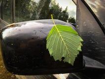 A folha verde colou ao espelho de carro preto Imagens de Stock Royalty Free