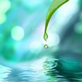 Folha verde com água da gota da água Fotos de Stock Royalty Free