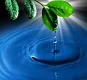 Folha verde com água da gota da água no backgrou azul Foto de Stock Royalty Free