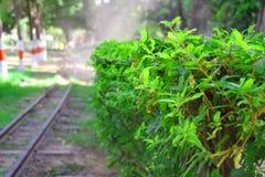 Folha verde com fundo do borrão Fotografia de Stock
