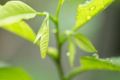 Folha verde com gotas Foto de Stock Royalty Free