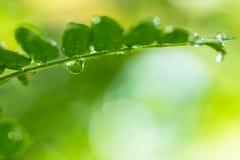 Folha verde com gotas Imagens de Stock