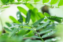 Folha verde com gotas Imagem de Stock