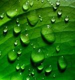 Folha verde com gotas fotografia de stock royalty free