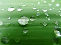 Folha verde com gotas da água Foto de Stock Royalty Free