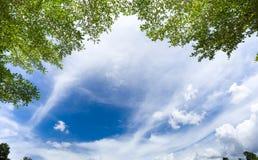 Folha verde com o céu brilhante da nuvem imagens de stock