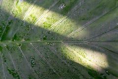 Folha verde com os pontos da luz solar imagens de stock