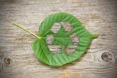 A folha verde com recicl o símbolo Imagens de Stock Royalty Free